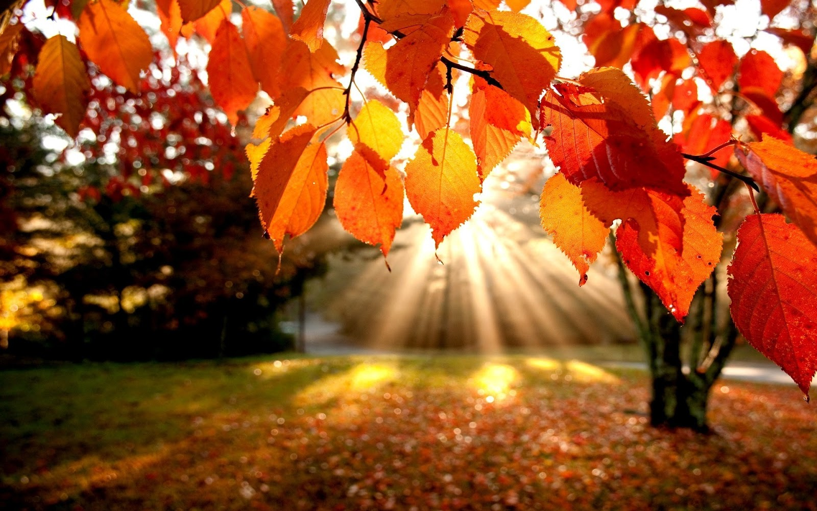 Weekend d'autunno